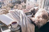 Cats sleeping in warm sunlight on the window sill by opened book, cup of tea or coffee, glasses and knitted sweater. Cozy spring weekend concept. The text on pages is not recognizable. poster