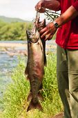 Man holds fish siberian salmon caught in river during tourist march. Kamchatka poster