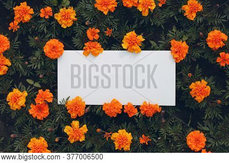 White Paper Poster With Copy Space On Flowerbed. Blank Template Sheet Without Inscription In Flowers