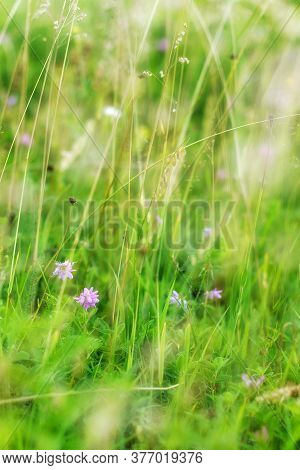 Small Purple Flowers In A Green Grass In Blur.