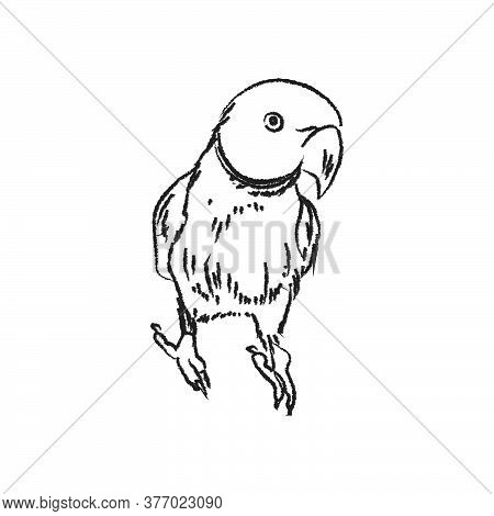 Rose-ringed Parakeet, Outline Vector Illustration , Parrot Bird Sketch For Design And Creativity