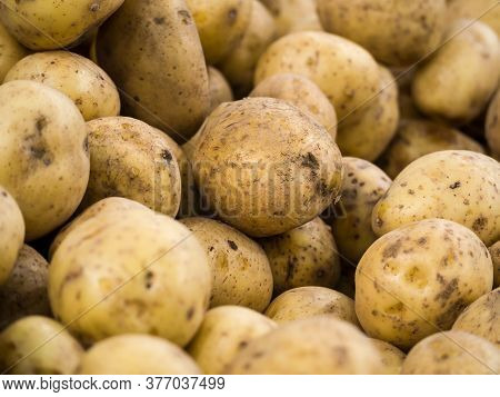 Potatoes For Selling At Vegetable Market. Fresh Organic Potato Stand Out Among Many Large Background