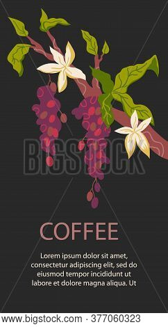 Packaging And Coffeeshop Card Flat Vector Illustration On Dark Brown Background.