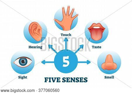 Five Senses Labeled Scheme To Receive Sensory Information Vector Illustration. Educational Collectio