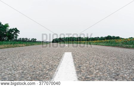 Paved Road Leading Along The Sunflower Field. Country Road In The Fields. Many Yellow Sunflowers On