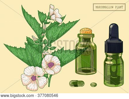 Marshmallow Branch And Two Vials, Hand Drawn Botanical Illustration In A Trendy Modern Style