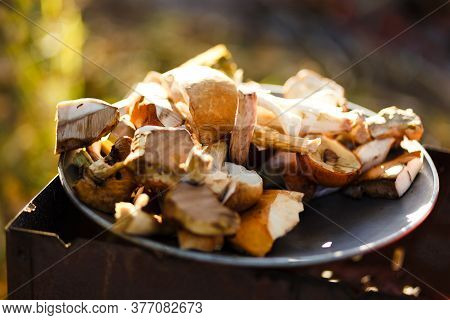 Fresh Forest Mushrooms On The Natural Forest Background.  Brown Cap Boletus (leccinum Versipelle) An