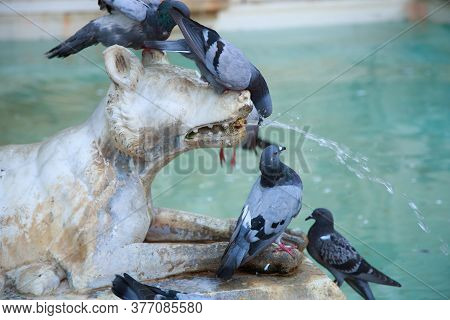 Birds In The Marble Fountain In Siena. Piazza Del Campo, Siena, Tuscany, Italy