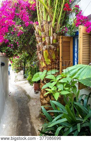 Old Narrow Street With Flowers And Plants In Anafiotika, Plaka District, Athens, Greece. Plaka Is To