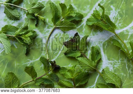 Mint Herbs To Make Tea Or Use In Food.
