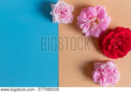 Pink Roses Buds On Colorful Background. Valentines Background.flowers Pattern Made Of Beige Roses. F