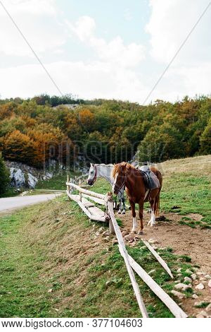 Brown And White Horse In A Wooden Paddock Outside.