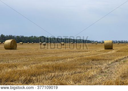 Straw Bales And Cloudy Landscape. Field After Harvest. Round Bales Of Straw In A Field Arranged In R