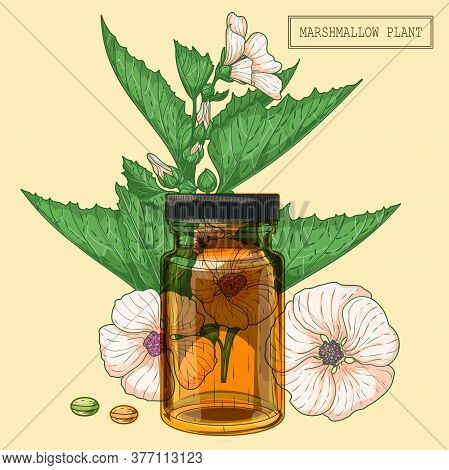 Medicinal Marshmallow Plant And Brown Glass Vial, Hand Drawn Botanical Illustration In A Trendy Mode