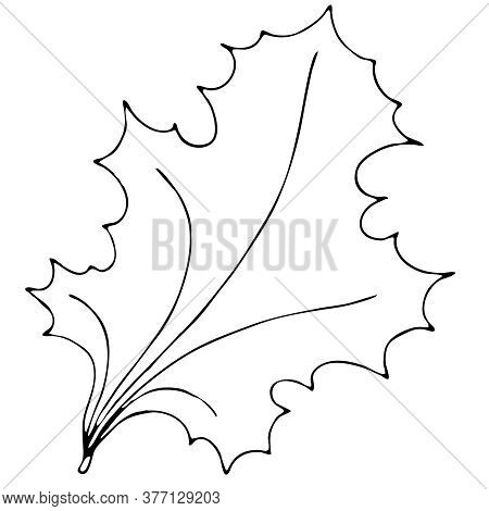 Autumn Carved Leaf, Maple, Freehand Drawing, Vector Element In Doodle Style, Coloring Book, Black Ou