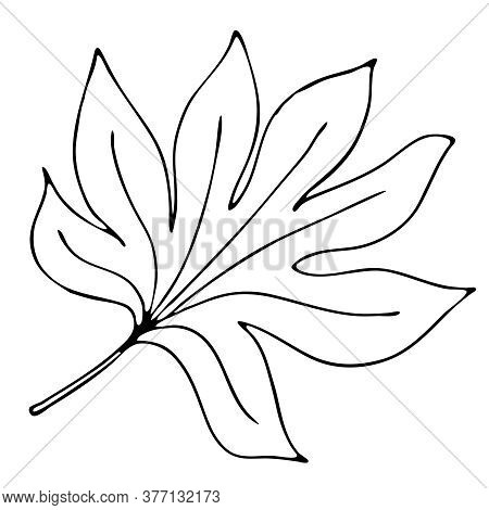 Autumn Carved Leaf, Chestnut, Freehand Drawing, Vector Element In Doodle Style, Coloring Book, Black