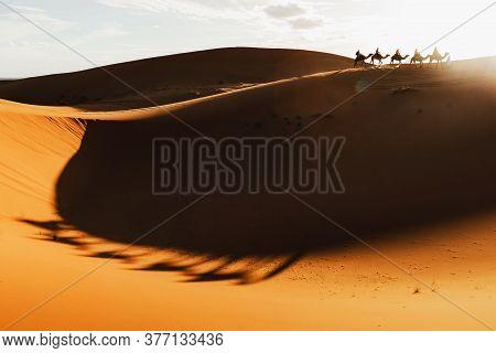 Camel Caravan Group In Desert Sand Dunes At Sunset Light With Beautiful Shadows. Tourist Entertainme
