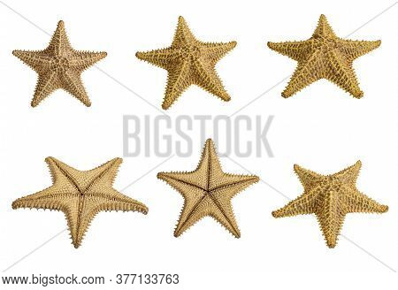 Set Of Starfish Brown Isolated On A White Background. Close-up. Side View