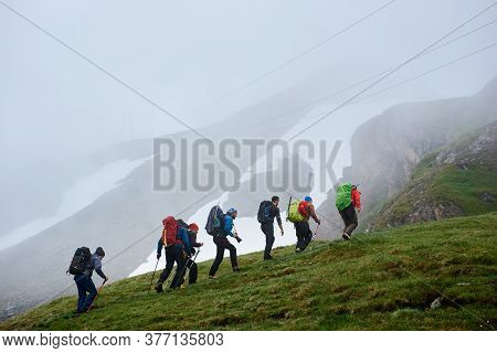Back View Of Male Hikers With Backpacks Climbing Grassy Hill. Young Tourists Walking Uphill In Mount