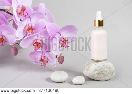 Pink Anti-aging Collagen, Facial Serum In Transparent Glass Bottle With Gold Pipette On Stone And Na