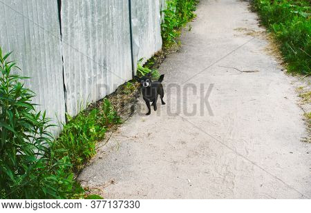 Little Black Doggie On A Village Road By A Vintage Fence