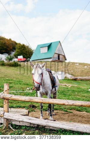 A White Horse In A Paddock, Against The Backdrop Of A House On A Hill.
