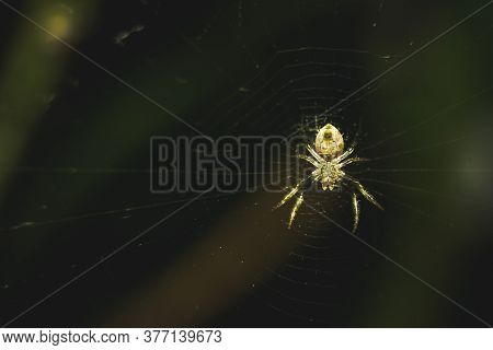 Spider On Web On Closeup Macro Photography. Small Spider On It Own Make Web Isolated On Dark Green B