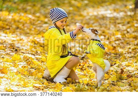 Child Girl With Dog Outdoors. Kid With Pet At Autumn. Jack Russell Terrier Puppy.