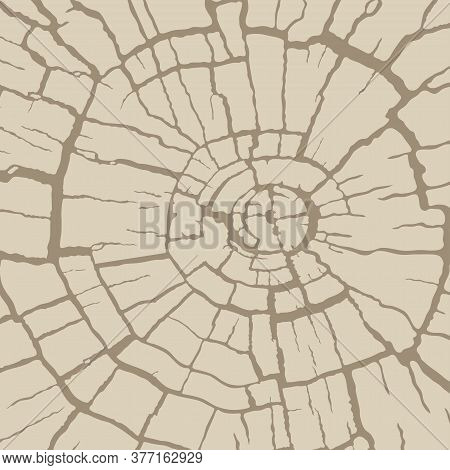 Cracked Wood Texture, Radial Cross Section. Wooden Cut Of A Tree Log. Pattern Of Cracks On An Old St