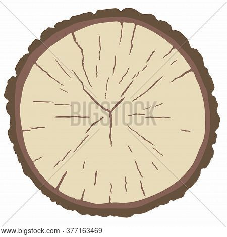 Vector Circle Wood Texture, Cross Section Of Tree Rings. Cut Slice Of Wooden Stump With Bark, Isolat