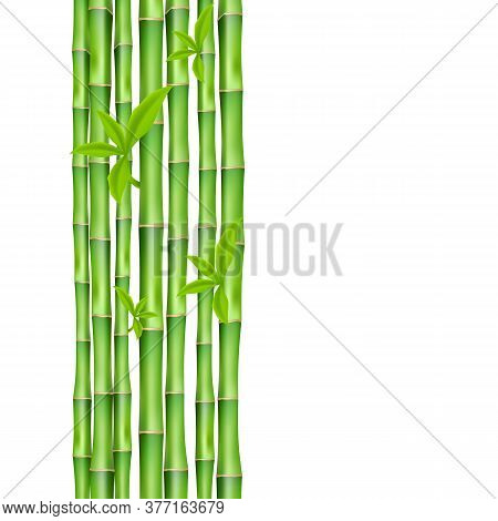 Banner With Green Bamboo Stems Realistic Vector Illustration Isolated On White.