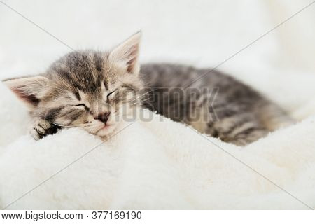 Striped Tabby Kitten Sleeping On White Fluffy Plaid Closeup. Portrait With Paw Of Beautiful Fluffy G