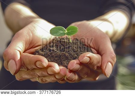 Woman Agronomist Is Holding Handful Of Soil With Green Seedling For Spring Planting. Concept Of Natu