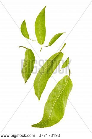 Flying Light Green Leaves Of Plum Tree Or Tea, Isolated On White Background. Food Levitation Concept