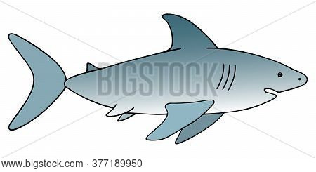 Shark. An Underwater Monster With A Toothy Jaw. Colored Vector Illustration. White Isolated Backgrou