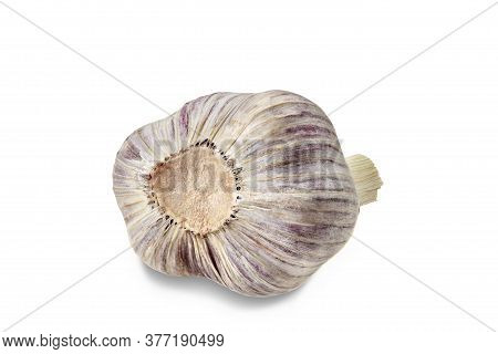 Unpeeled Bulb Of Garlic Isolated On White Background. Vegetable, . Fresh, Ripe Summer Harvest. Close