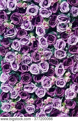 Paper Roses  Background Image, A Wall Decorated With Purple Colorful Flowers.