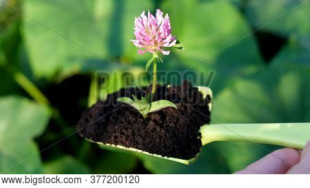 Gardening At Spring. Close Up Green Plastic Trowel With Flower Into Dirt Or Soil To Dig Into Bare So