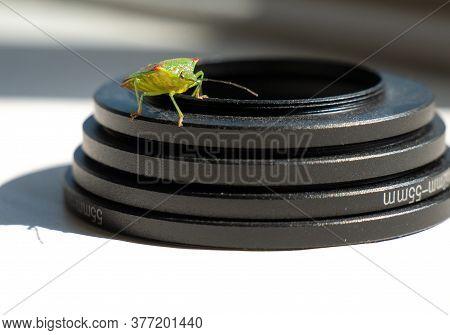 Birch Shieldbug Stink Bug Elasmostethus Interstinctus On Lens Ring