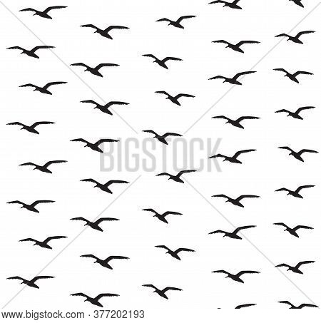 Vector Seamless Pattern Of Hand Drawn Sketch Seagull Flock Silhouette Isolated On White Background