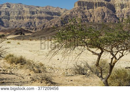 Rocky Hills Of The Negev Desert In Israel. Breathtaking Landscape Of The Rock Formations In The Sout