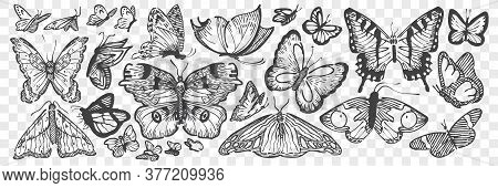 Hand Drawn Butterflies Doodle Set. Collection Of Pencil Chalk Drawing Sketch Different Coloring Wing