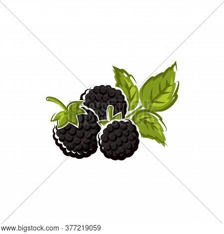 Blackberry Fruit Isolated Summer Berry. Vector Wild Or Garden Bramble, Vegetarian Food Dessert