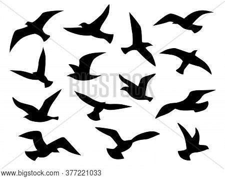 Bird Silhouettes. Flying Birds Flock, Black Drawing Flight Raven Tattoo Template, Monochrome Seagull