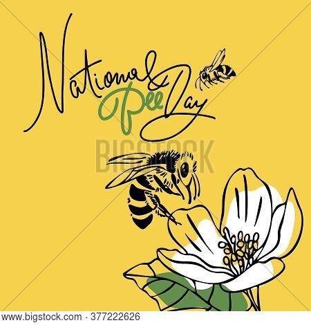 National Bee Day. Vector Design. Outline Style. Square Format. Greeting Card, Banner, Poster, For Wo