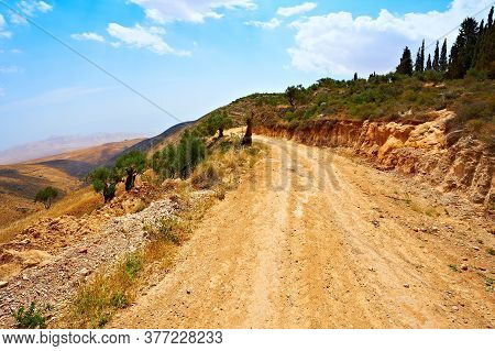 Dirt Road Over A Cliff Through A Stunted Olive Grove In Israel. Retro Style