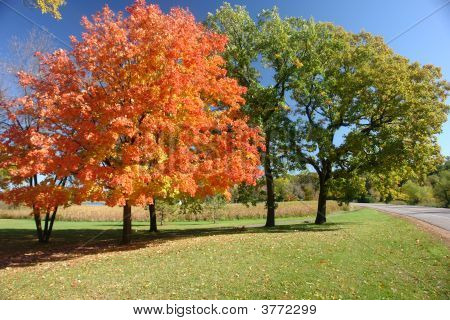 Beautiful Fall Trees