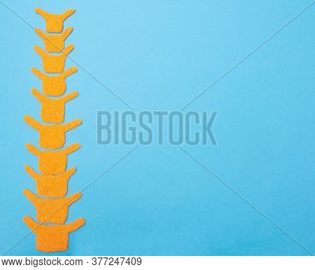 Human Spine Model On A Blue Background. The Concept Of Youth And Flexibility Of The Human Spine. Cop