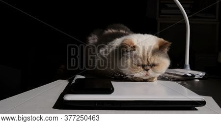 Home Office. Adorable Beige Domestic Cat Lit By The Sunlight Is Sleeping Cozily On A Laptop. The Bre