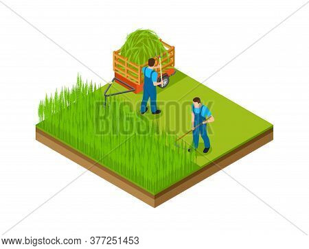 Hay Season. Men Mow Grass, Make Area For Garden. Isometric Gardening, Agriculture Or Farming Vector